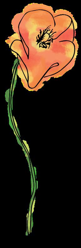Poppies-02